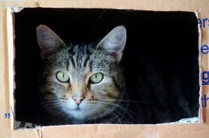 a cat sitting in the leftover moving boxes