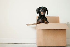 get ready for moving to long island city - a dog in a moving box