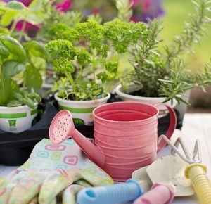 flowers in a pot and gardening gloves