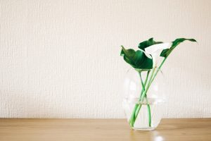 a plant in a see-through vase with water