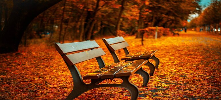 two benches in the fall